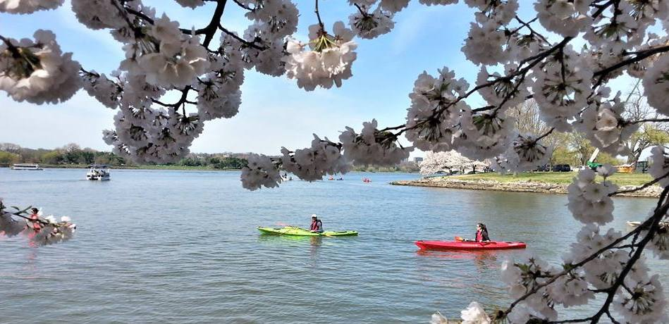National Cherry Blossom Festival 2019