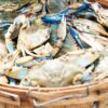 Snag-A-Slip Best Maryland Crabs Annapolis