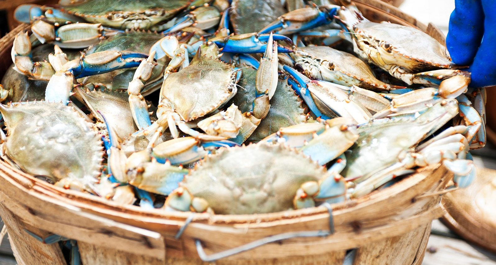 Feeling Crabby? Alexa's Picks for Crab in Annapolis