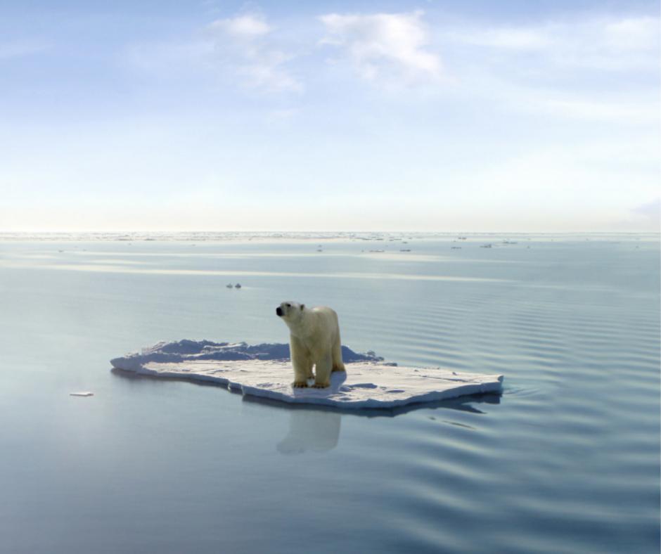 Polar Bear | Earth Day | Snag-A-Slip