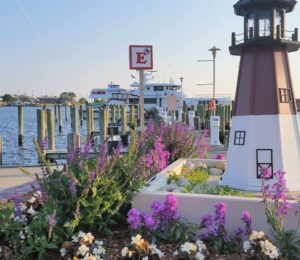Flowers at Somers Marina in Crisfield