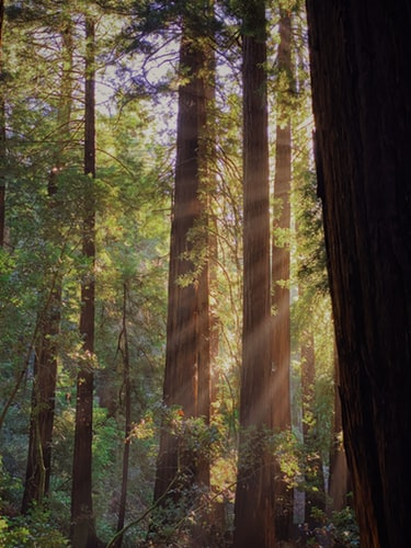 Muir Woods | San Francisco | Snag-A-Slip