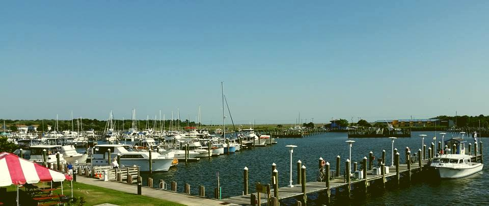 The Daily Catch – Somers Cove Marina in Crisfield, Maryland!